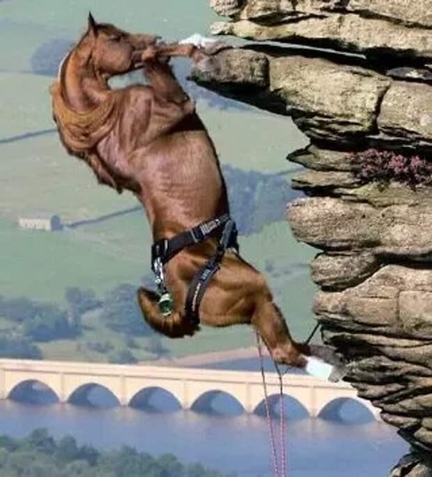 Единственная в мире лошадь, у кого не было бы проблем  с Великой Китайской стеной (Фотошоп)