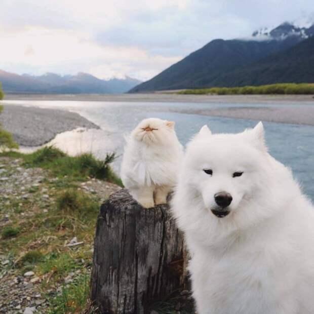 Кот и собака на природе