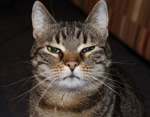 «Вы за что ребёнка мучаете?»: кот Бублик оставался дома один и мог часами орать. В итоге к нему домой пришли полицейские