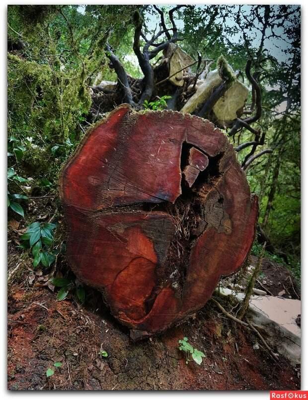 Памятник древней природы