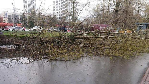 Прокуратура начала проверку после падения дерева на ребенка в Москве