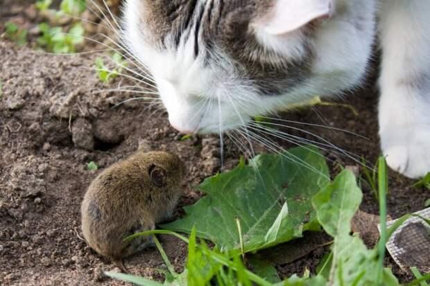 Здоровье мыши