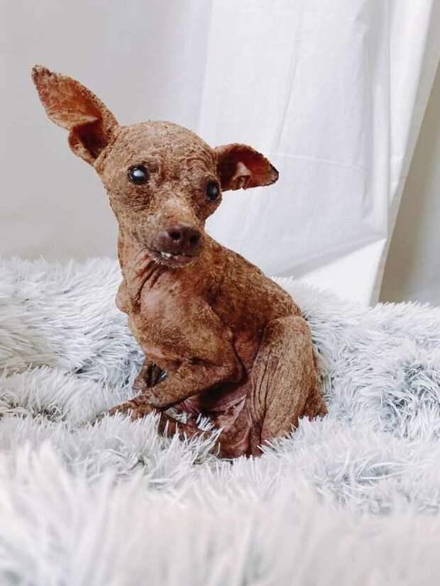 Хрупкая облезлая собака напоминала мумию и дрожала от страха при виде людей