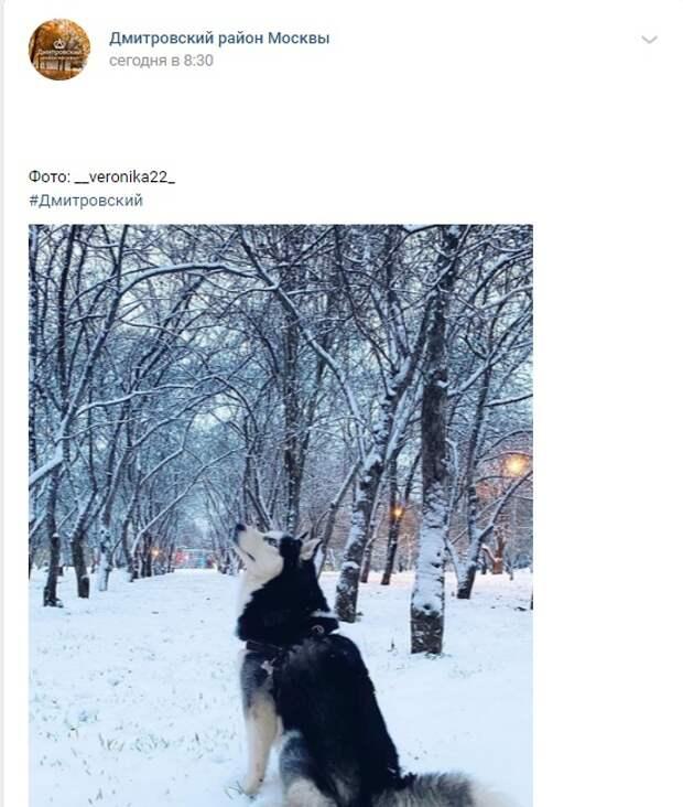 Фото дня: снежный пес в парке «Ангарские пруды»