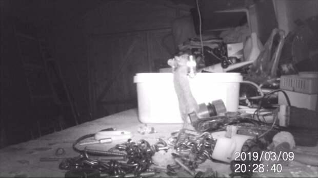 Пенсионер гадал, кто убирается по ночам в сарае, пока не установил камеру наблюдения видео, грызуны, животные, забавно, инструменты, истории, мыши, мышь