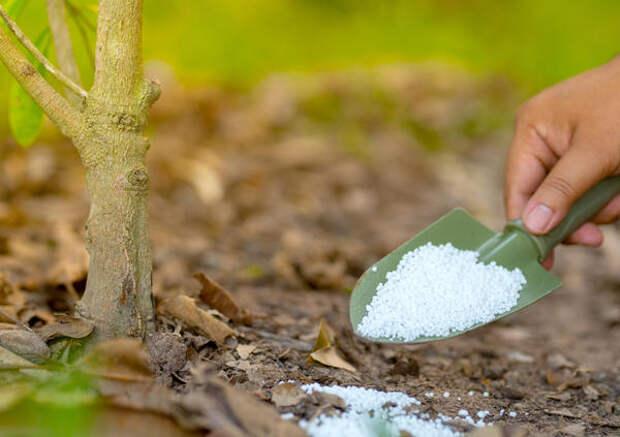 Осенняя фосфорно-калийная подкормка повысит устойчивость растений к холодам