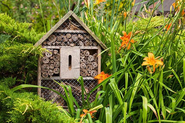 Отели и домики. Зачем на участке жилища для пчёл и ежей