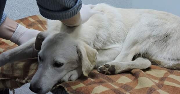 Собаку выволокли из машины, а она стала плакать… Двум девушкам пришлось спасать животное!