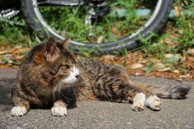 Очень колоритные уличные коты город, животные, кот, кошка, улица, уличные кошки, эстетика