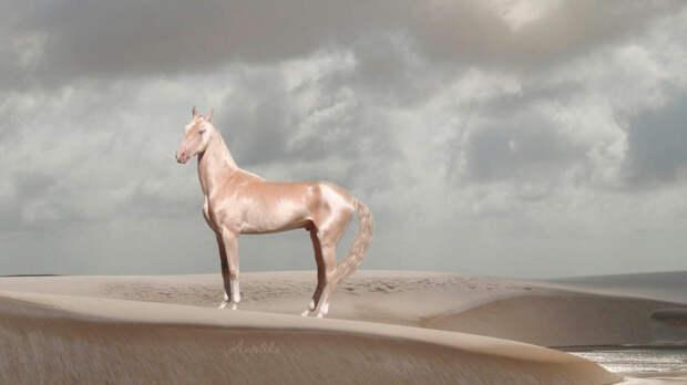 2. Ахалтекинская лошадь.