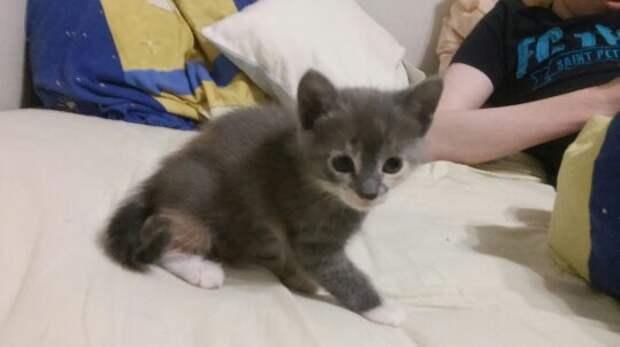 Крошечный котенок забился в угол в подъезде и жалобно плакал