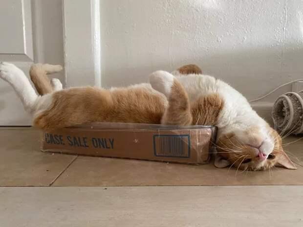 Хроническая усталость или стресс? Взгляните на фотки с котиками и пёсиками