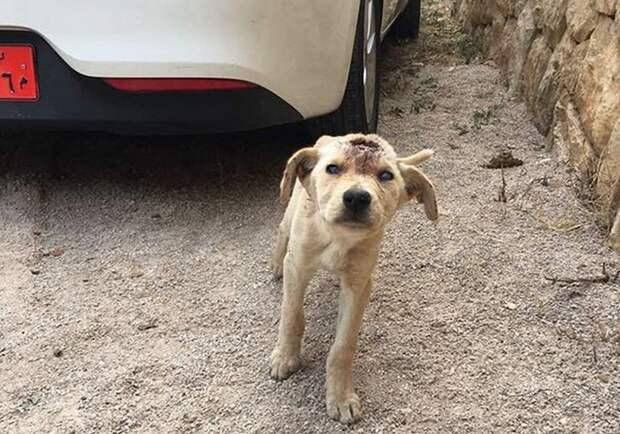 Собаку начинили дробью, словно пирог изюмом… Что теперь думает о людях этот пёс с доверчивыми глазами?!