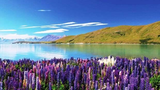 Озеро Текапо в Новой Зеландии