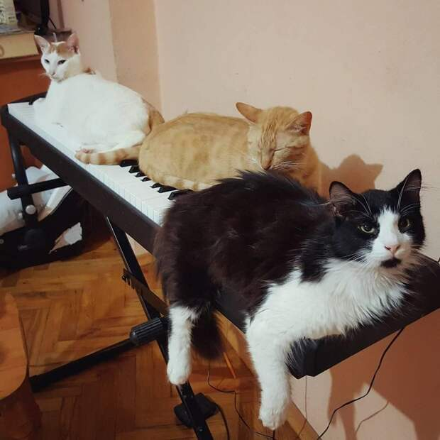 Пианист спас девять кошек, а теперь это лучшие его слушатели