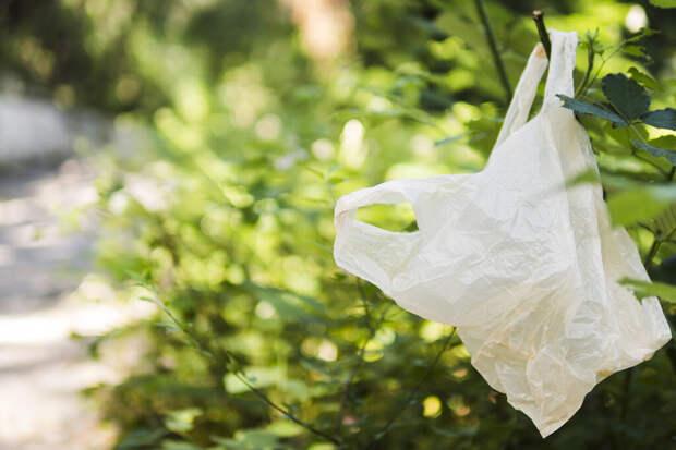 Пластиковые пакеты оказались «зеленее» бумажных и тканевых