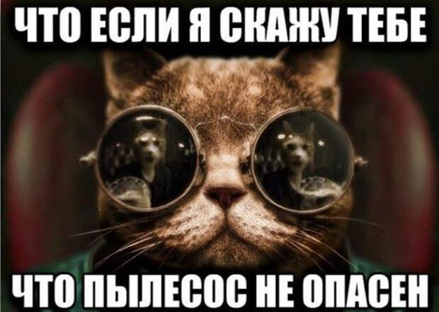Нео :: морфеус :: Матрица (фильм) :: котики :: очко :: коты ...