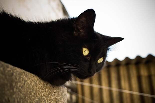 Вернулся в старый дом, посмотрел на закрытую калитку и вернулся к хозяевам: история кота по кличке Трюфель