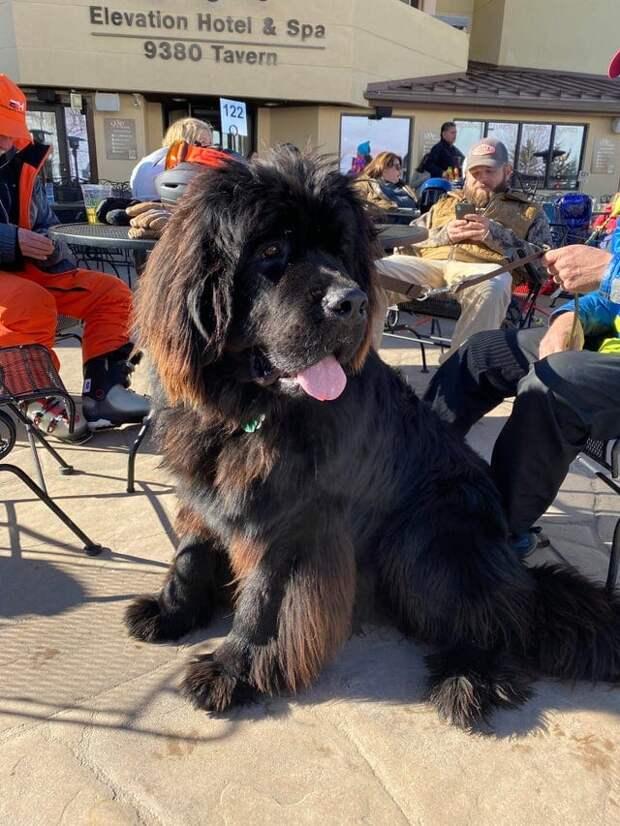 16 дальних родственников собаки Баскервилей, которые давно её переплюнули