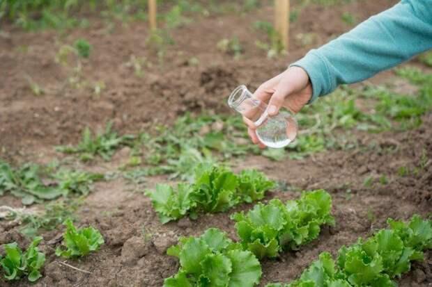 выращивание растений на грядке