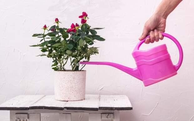 Подкормки для комнатных растений