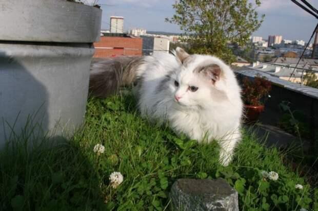 В Екатеринбурге уничтожили сад на крыше 9-этажки, который 18 лет назад разбил местный житель