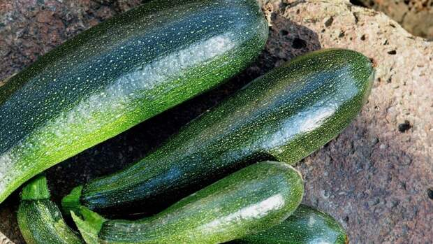 Употребление кабачков снижает риск появления атеросклероза и камней в желчном пузыре
