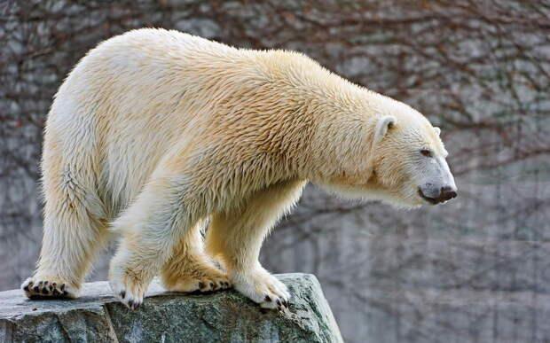 Список самых красивых животных мира
