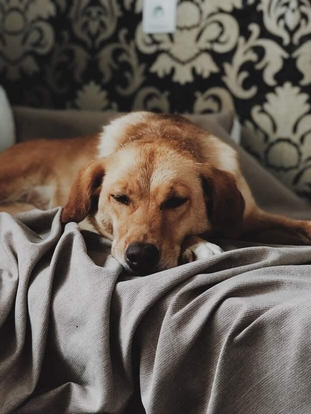 Щенков собаки отравили, а она скиталась по местности, пока не встретила девушку, готовую помочь