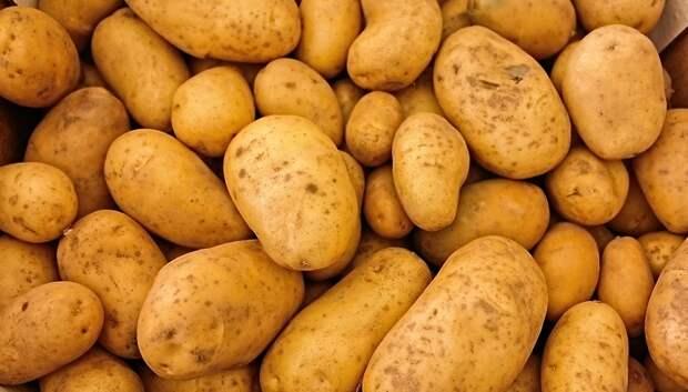 Около 400 тыс тонн картофеля планируют собрать в Подмосковье в 2018 году