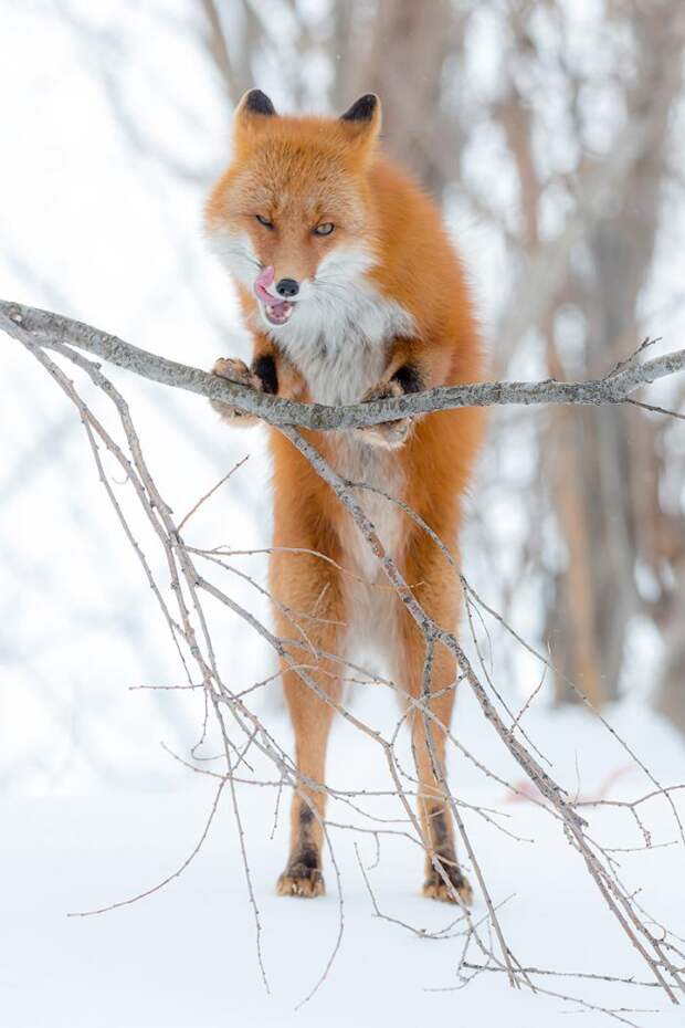 Красота дикой природы для позитива (10 фото)