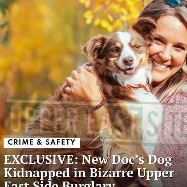 Владелица обвинила догуолкера в краже собаки. Развязка – настоящий шок
