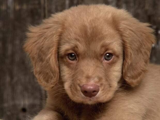 милая собачка простомилаяпёся - PolinaDreamer