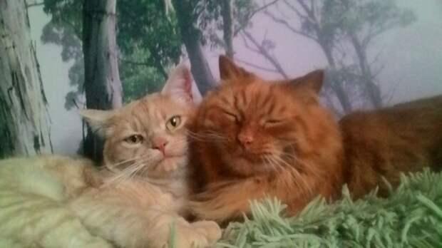 Это просто счастье, когда твой кот тебе доверяет и любит!