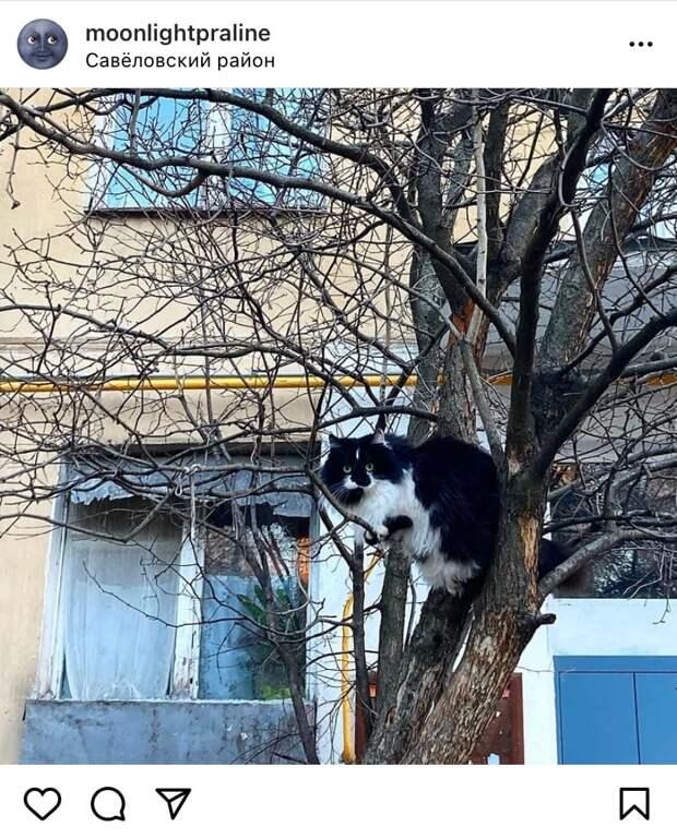 Фото дня: в Савеловском гнездится кот