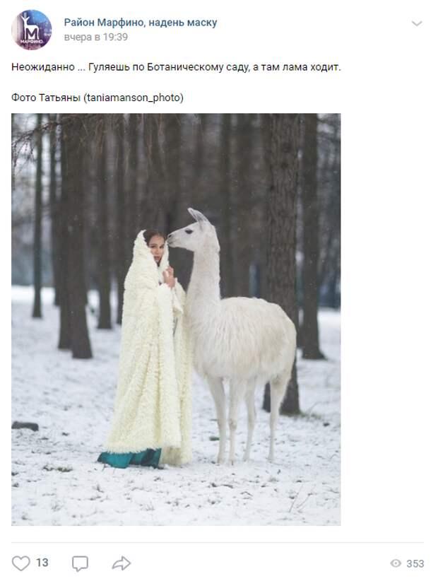 Фото дня: лама наведалась в Ботанический сад