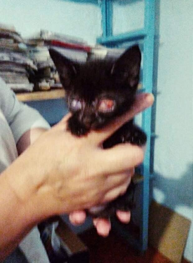 Помогите!!!!! Местный ветеринар не умеет вылечивать такие глазки и потому предлагает котëнка УСЫПИТЬ!!!