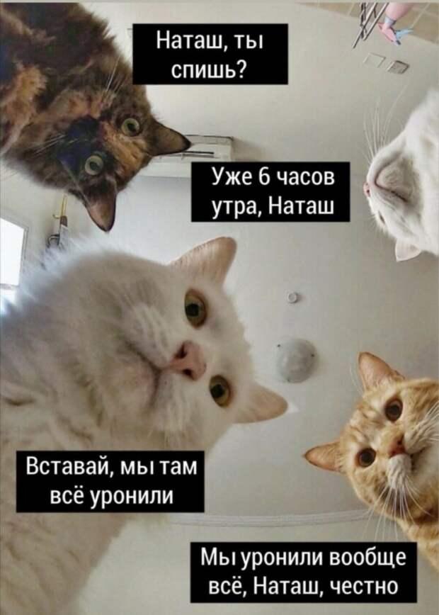 «Наташ, мы все уронили»: Что за мем?