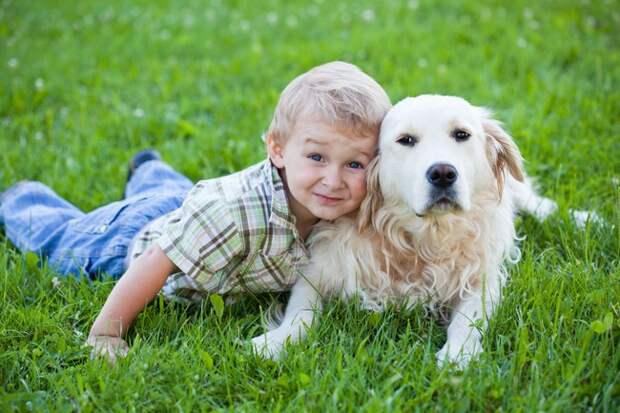 4. Здоровое сердце дети, домашние животные, собака, собаки