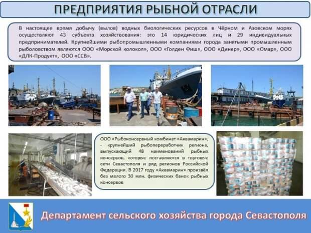 Рыба в Севастополе