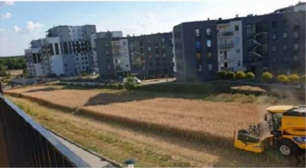 Косовица среди многоэтажек: почему у жителей Люблина под окнами раскинулись пшеничные поля