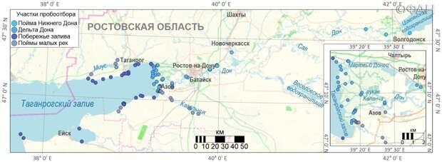Фауна под ударом: в чем причина массовой гибели рыбы в Ростовской области