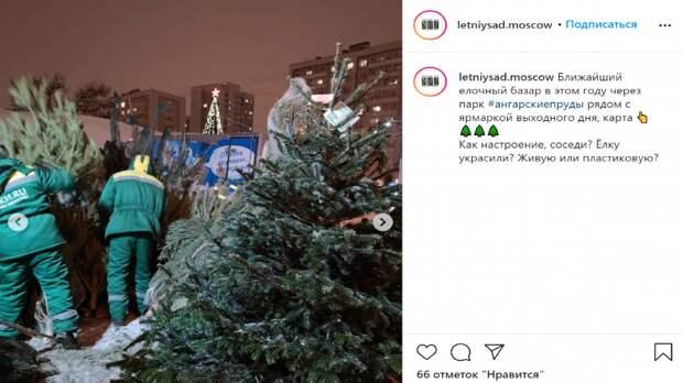 Фото дня: пушистые ёлочки на бескудниковском базаре