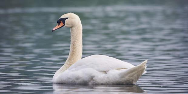 Массовая гибель птиц: в Дагестане нашли туши 300 уток и лебедей