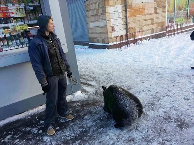 """Имейте помещен в щеку: детеныш был пойман короткий во время прогулки по Москве.  Это владелец признался, что результат был «более очевидным, чем обычно"""", как это было снег"""