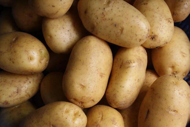 В Новороссийске картофель из Турции не прошел фитосанитарный контроль