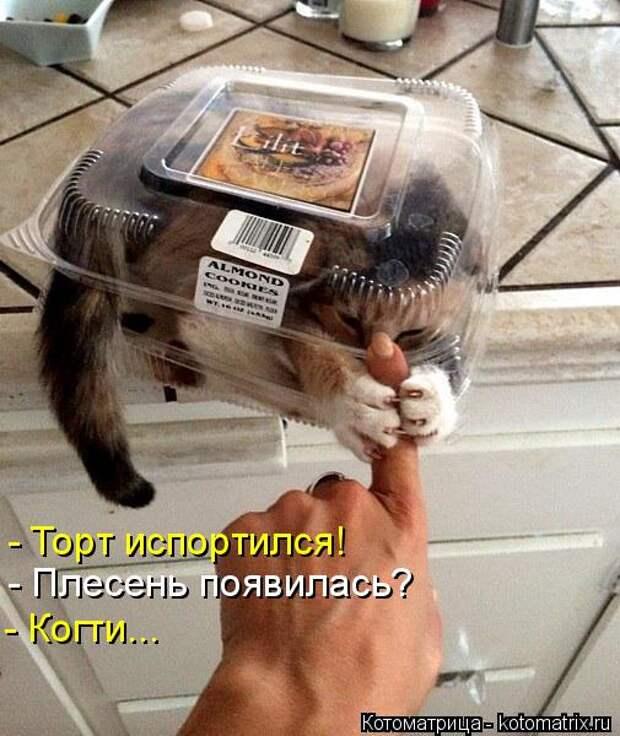 Котоматрица: - Торт испортился! - Плесень появилась? - Когти...