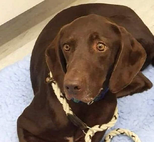 Девять жизней или удача: как псу удалось выжить после череды трагедий