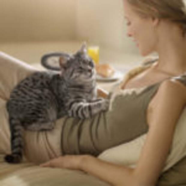 Кошка любит ложиться на больное место человека