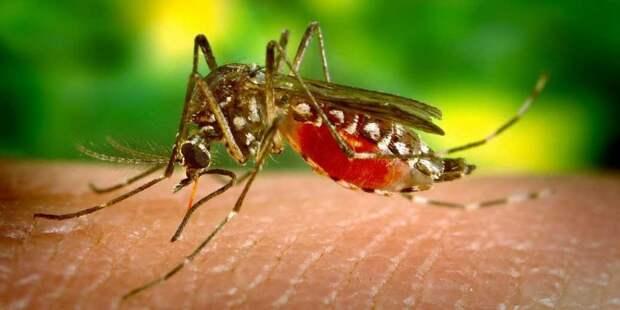 Можно ли заболеть от укуса комара?